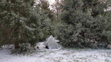 Snow in Cedars